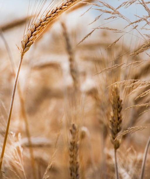 Žemės ūkio įmonių procesų optimizavimo sistemos